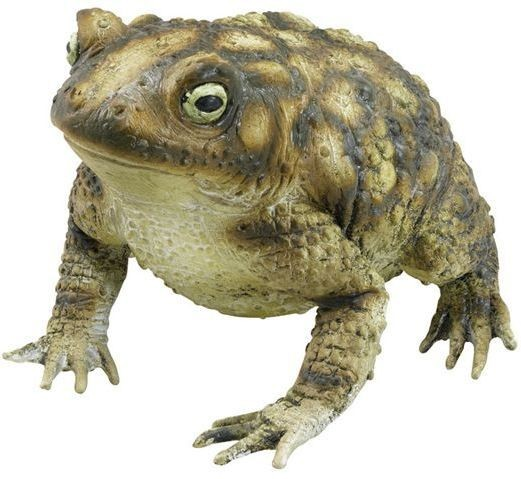 Rubber Toad (Animals Fancy Dress Decorations)