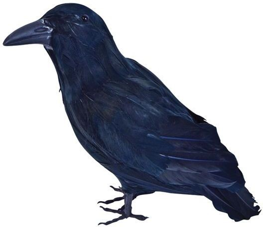 Feather Raven (Animals , Halloween Decorations)