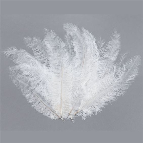 Blondine Feather. White 12/Pkt (1920S , Burlesque Fancy Dress)