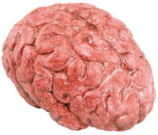 Bloody Brain Prop (Halloween Fancy Dress)