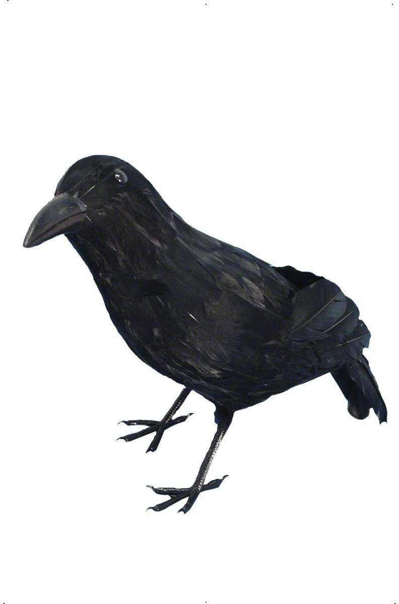 Crow Feathered - Fancy Dress (Halloween)