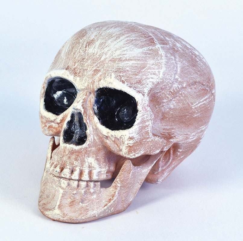 Skull Head Realistic Accessories