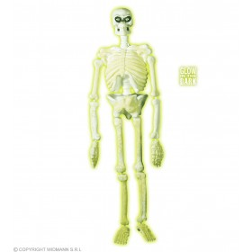Laboratory Skeleton Gid 150Cm - Fancy Dress (Halloween)