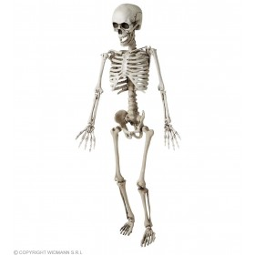Posable Skeleton - 120Cm - Fancy Dress (Halloween)