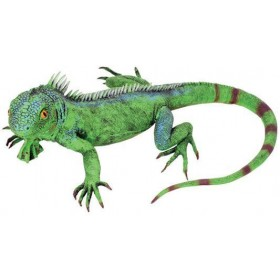 Lizard Prop. Green (Animals Fancy Dress Decorations)