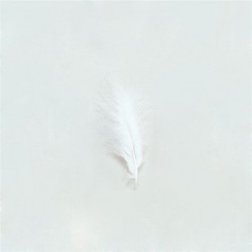 Marabou White Feathers 12/Pkt (1920S , Burlesque Fancy Dress)