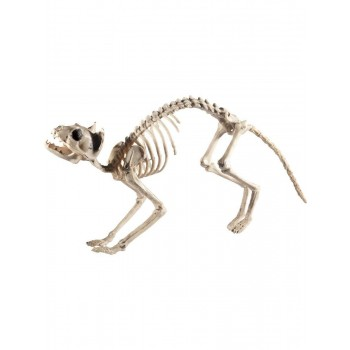 Cat Skeleton Prop Fancy Dress Accessory